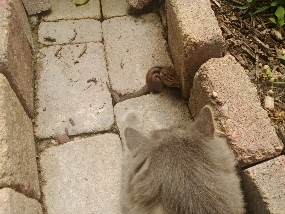 sincap ve kedi