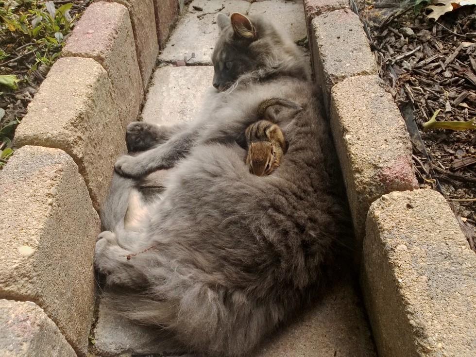 kedi-ve-sinca-patiliyo-7