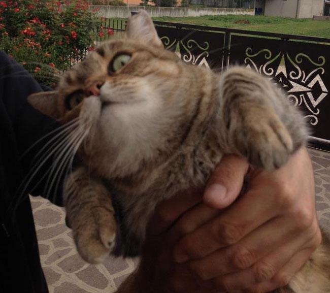 kedici-kedi-patiliyo-6