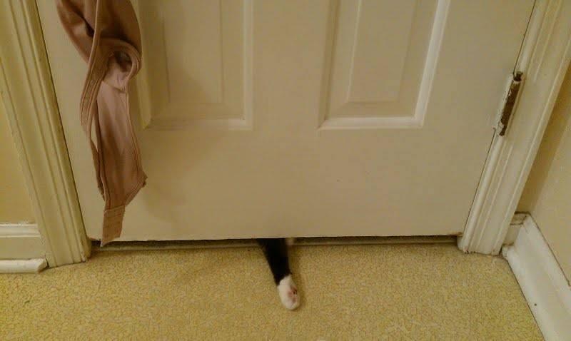 kedilerin-tuvalet-aski-patiliyo-12