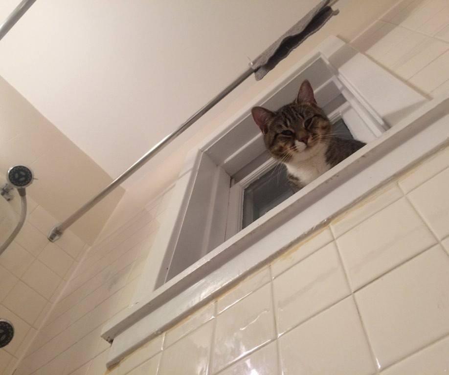 kedilerin-tuvalet-aski-patiliyo-6