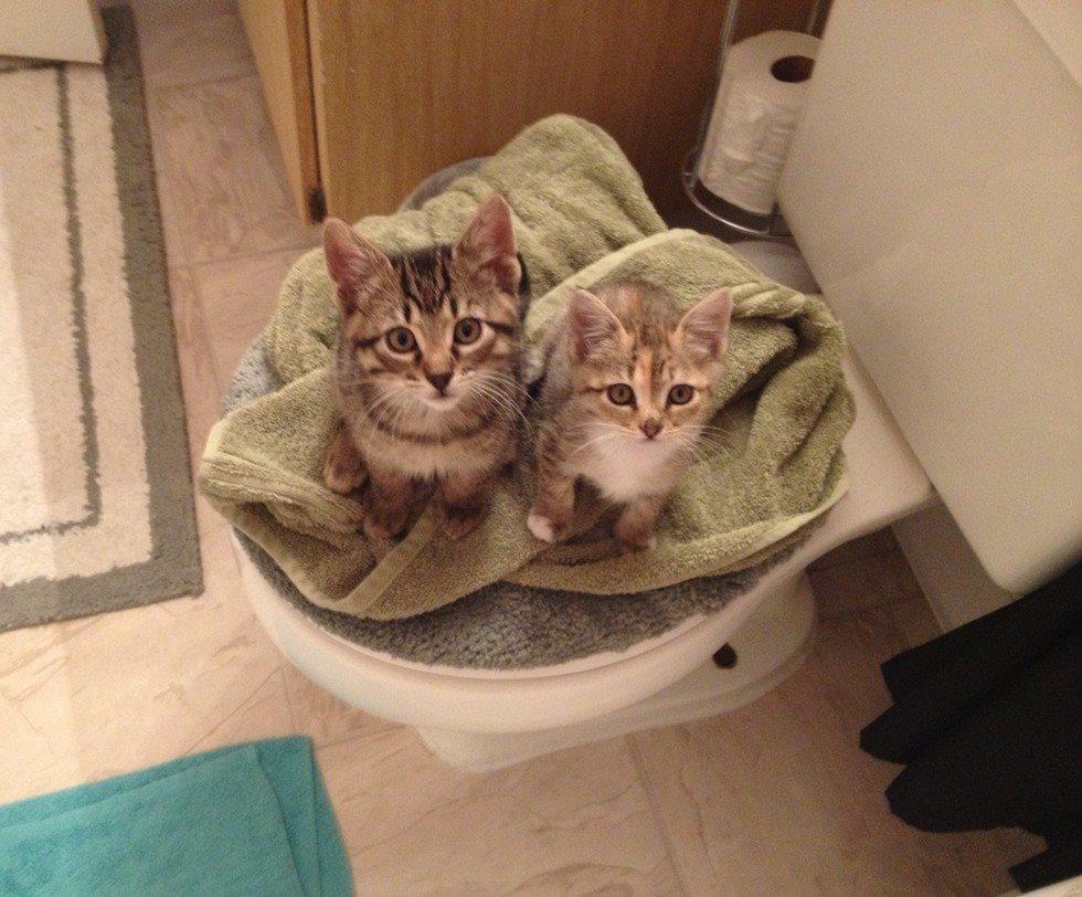 kedilerin-tuvalet-aski-patiliyo-9