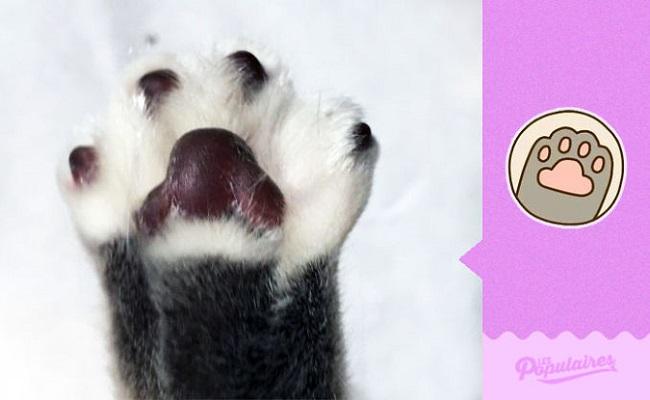 Facebook'taki Kedili Çıkartmalar Gerçek Hayatta Nasıl Gözükürdü?