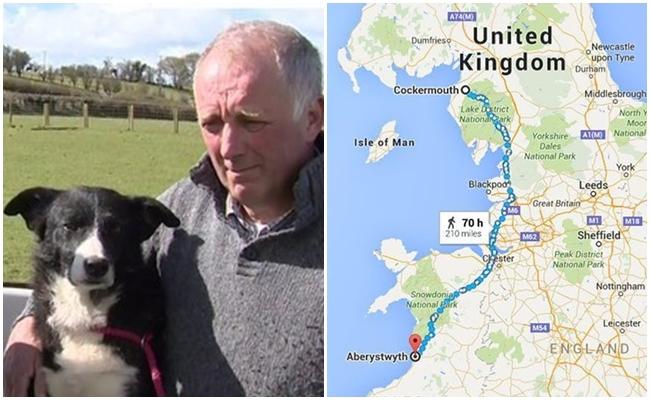 Onu Terk Eden Ailesine Tekrar Kavuşmak İçin 400 KM Yol Giden Köpek Pero'nun Hikayesi