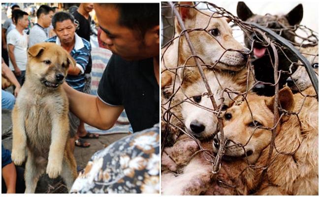 20 Gün Kala Çin'deki Köpek Yeme Festivali'ne Dur Demek İçin 8 Yürekli Neden