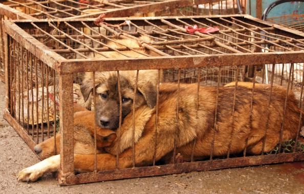 GUIZHOU, CHINA - DECEMBER 21: (CHINA MAINLAND OUT)Winter Solstice became dog slaughter day on Friday December 21, 2012 in Guiyang, Guizhou, China. It's a custom that people eat dogs' meat to celebrated Winter Solstice in several provinces in China.(Photo by TPG/Getty Images)
