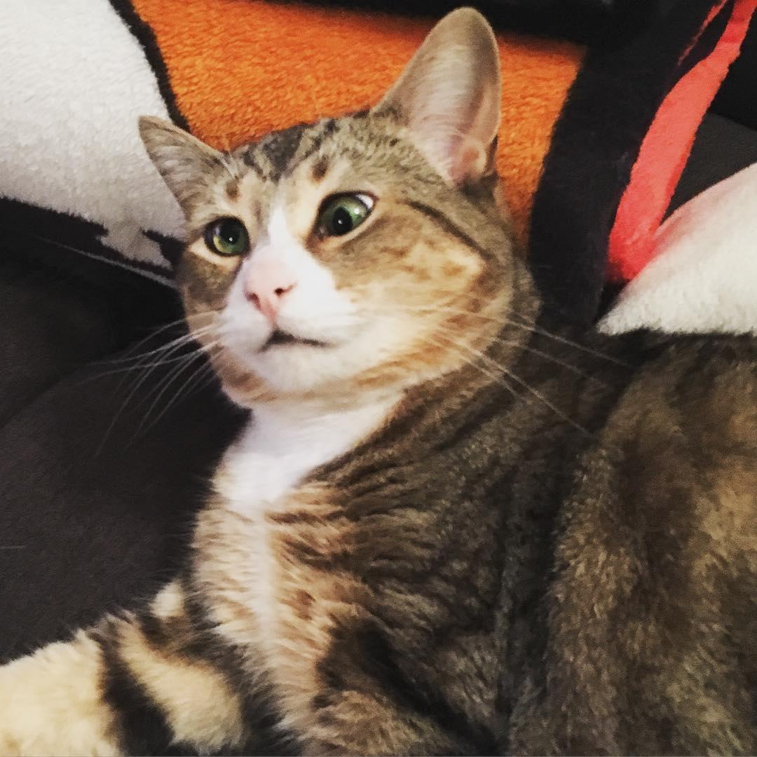 sasi gozlu kedi