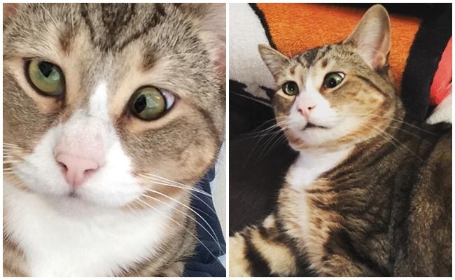 """Gözlerine İlk Bakışta Aşık Olacağınız Şaşı Gözlü Kedi """"Köfte""""nin Tatlı Hayatı"""