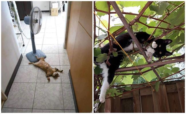 """""""Esmiyor"""" Diye Miyavlayan, Sıcaklardan Bizler Kadar Bunalmış 17 Kedicik"""