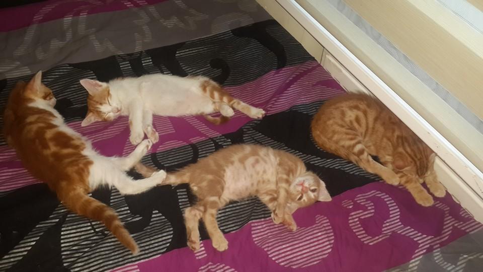 sicaklardan-bunalan-kediler-patiliyo-10