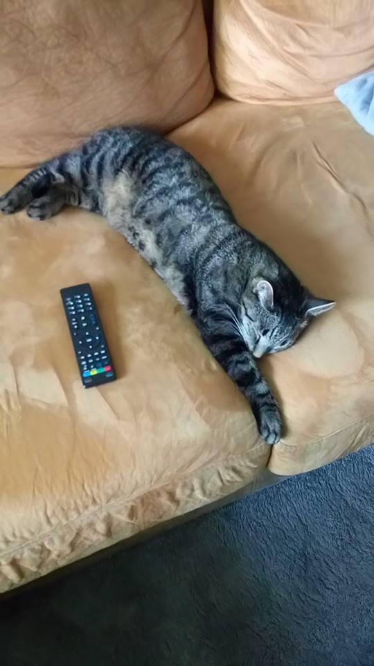 sicaklardan-bunalan-kediler-patiliyo-11