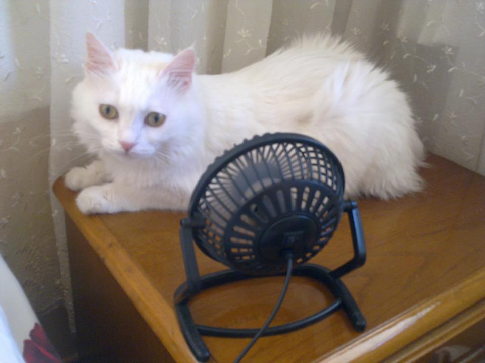 sicaklardan-bunalan-kediler-patiliyo-13