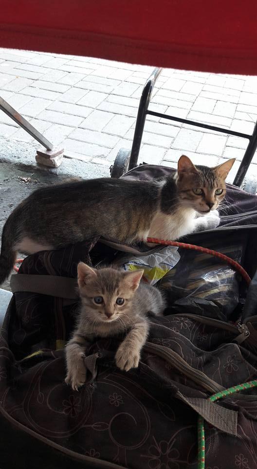 sicaklardan-bunalan-kediler-patiliyo-15