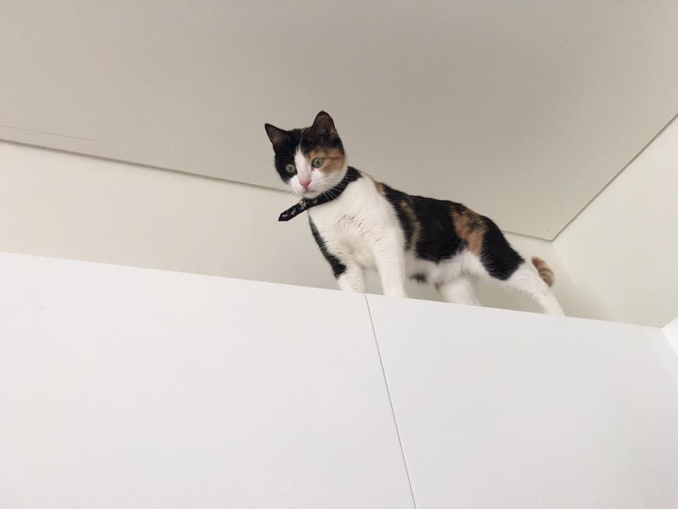 sicaklardan-bunalan-kediler-patiliyo-17