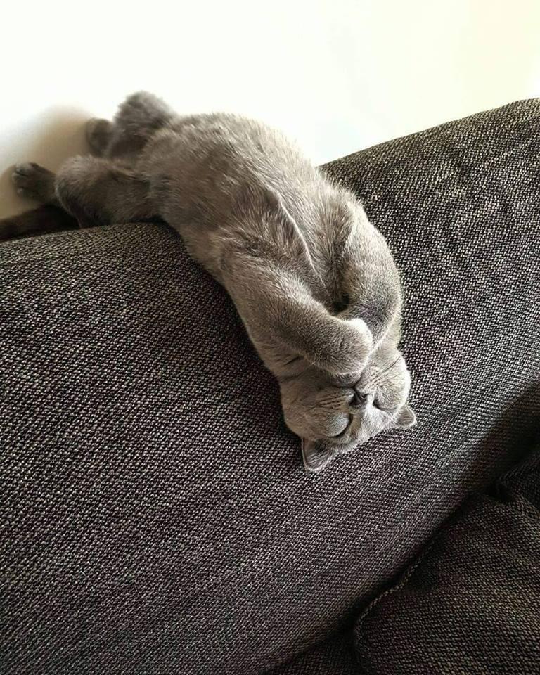 sicaklardan-bunalan-kediler-patiliyo-4