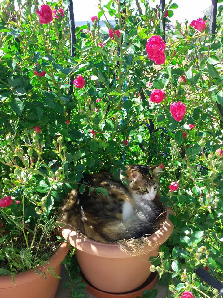 sicaklardan-bunalan-kediler-patiliyo-8