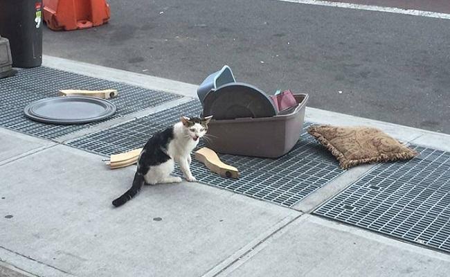 Eşyalarıyla Birlikte Acımasızca Sokağa Terk Edilen Kedinin Hüzünlü Hikayesi
