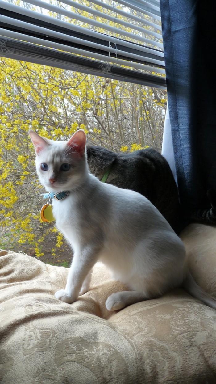 yavru-kedinin-mucize-hayatta-kalma-hikayesi-7
