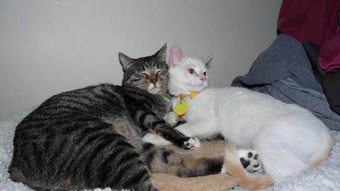 yavru-kedinin-mucize-hayatta-kalma-hikayesi-8