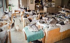 4.kediler.kralicesi.listelist