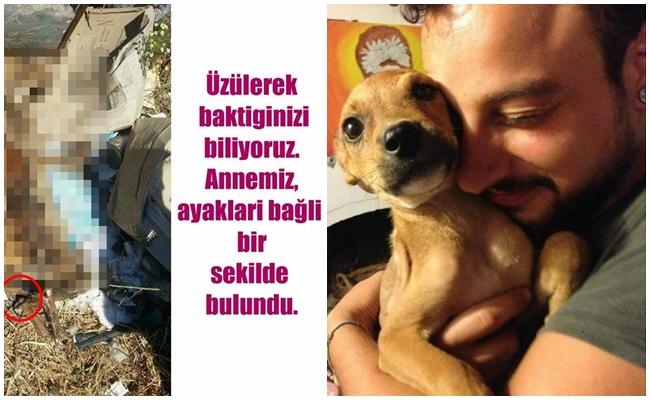 Anneleri Feci Bir Şekilde Öldürülen İki Köpeğin Gözleri Buğulandıracak Hayata Tutunuş Hikayesi