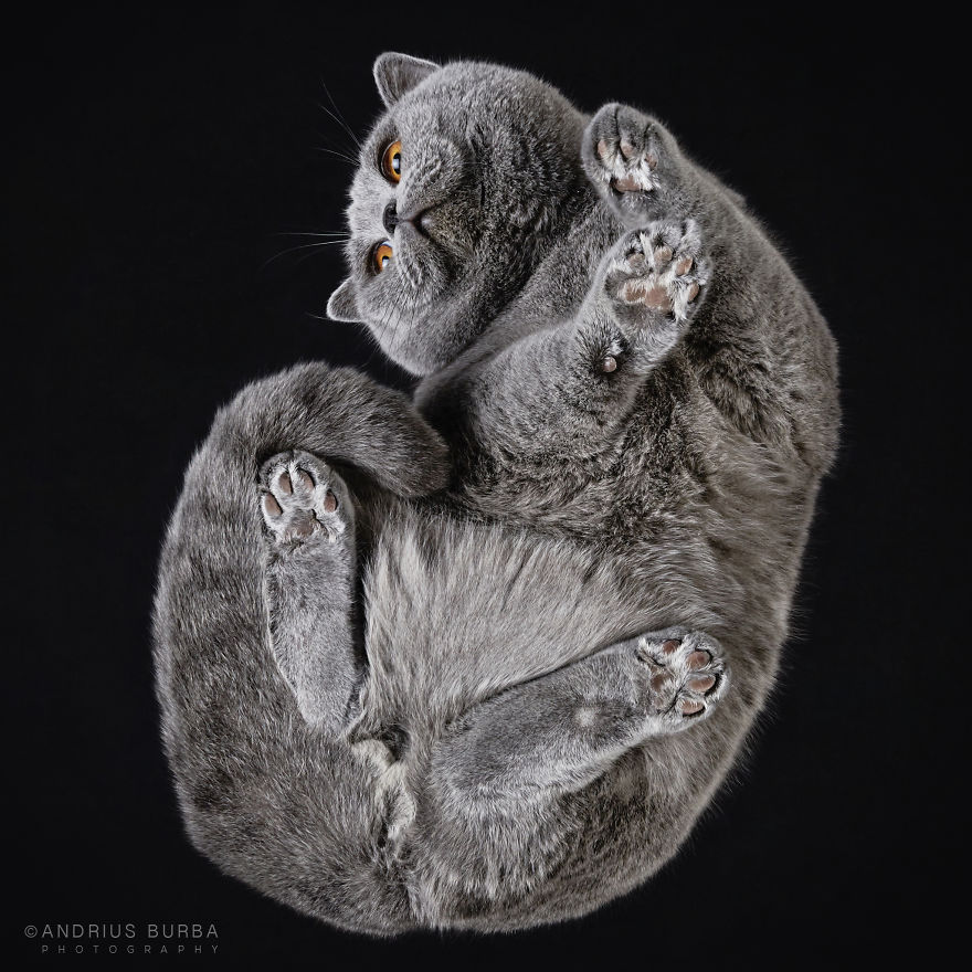 alttan-kedi-fotograflari-patiliyo-1