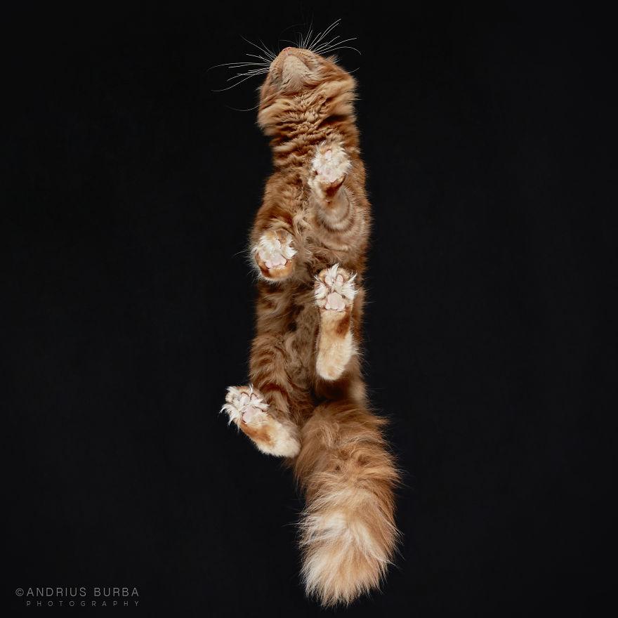 alttan-kedi-fotograflari-patiliyo-11
