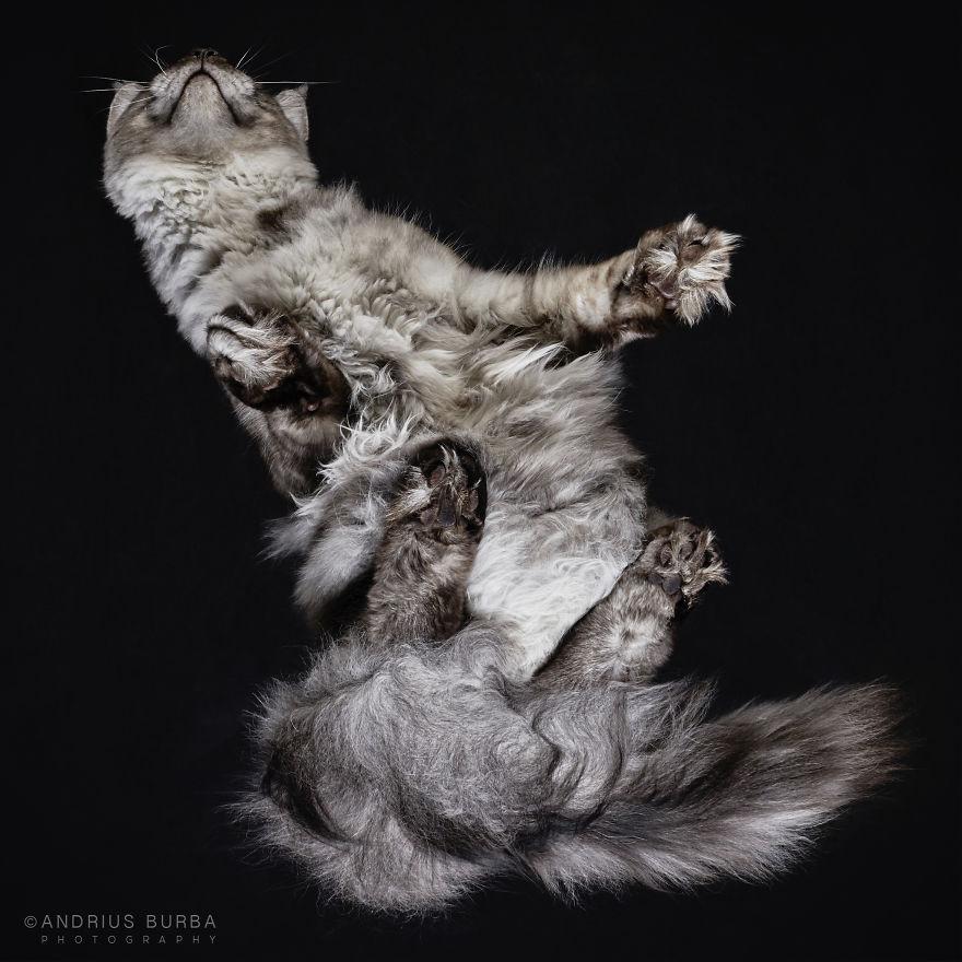 alttan-kedi-fotograflari-patiliyo-12