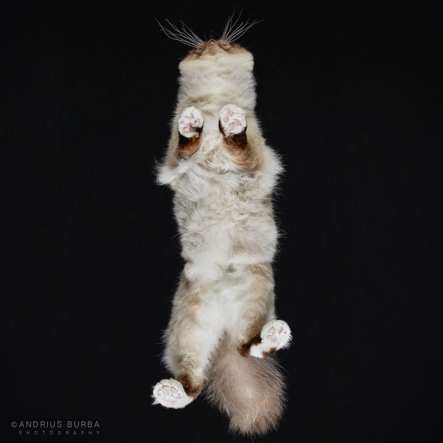 alttan-kedi-fotograflari-patiliyo-14