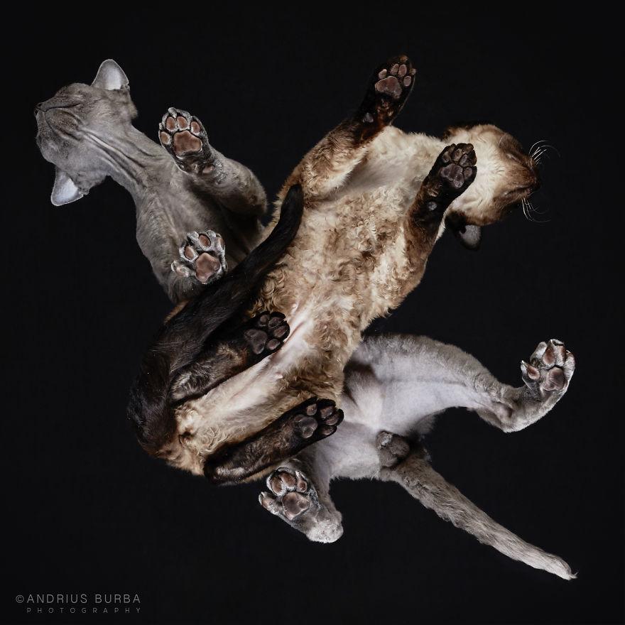 alttan-kedi-fotograflari-patiliyo-16