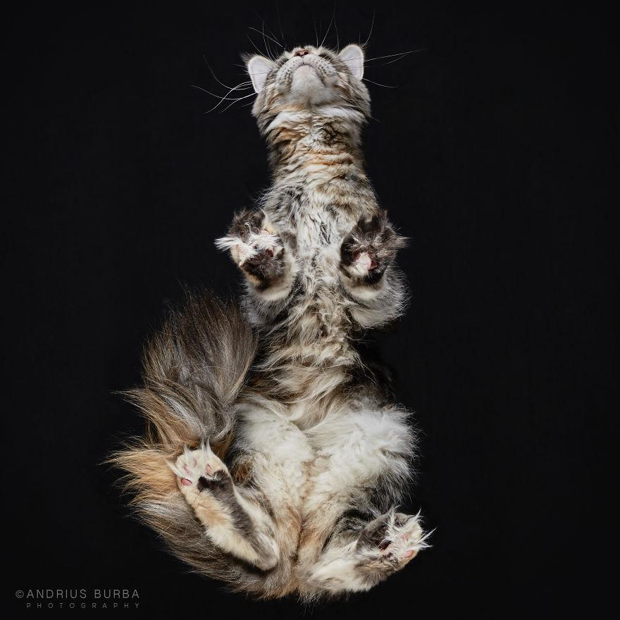 alttan-kedi-fotograflari-patiliyo-17