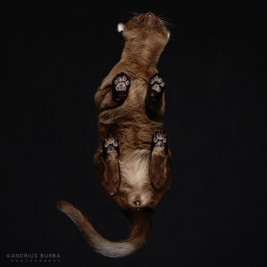 alttan-kedi-fotograflari-patiliyo-18