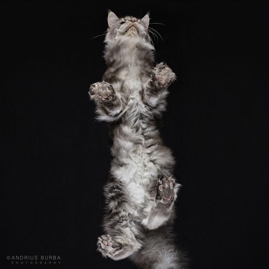 alttan-kedi-fotograflari-patiliyo-19