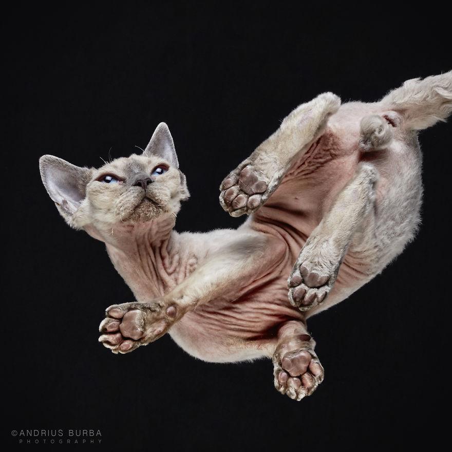alttan-kedi-fotograflari-patiliyo-20