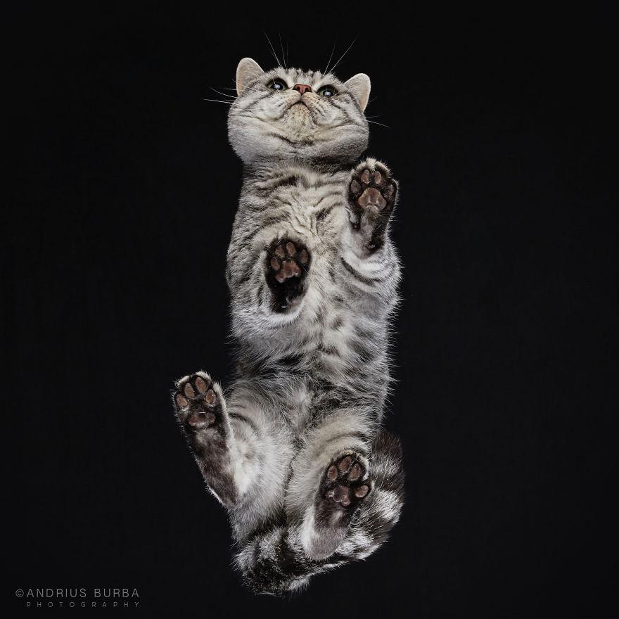 alttan-kedi-fotograflari-patiliyo-3