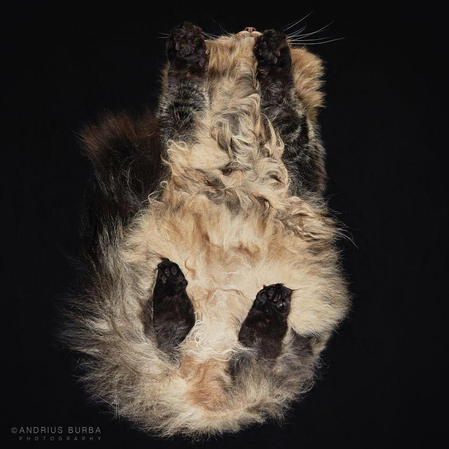 alttan-kedi-fotograflari-patiliyo-5