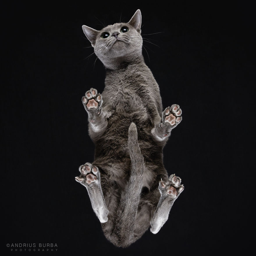 alttan-kedi-fotograflari-patiliyo-8