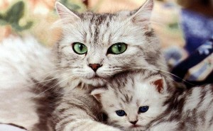 anne-ve-yavru-kedi