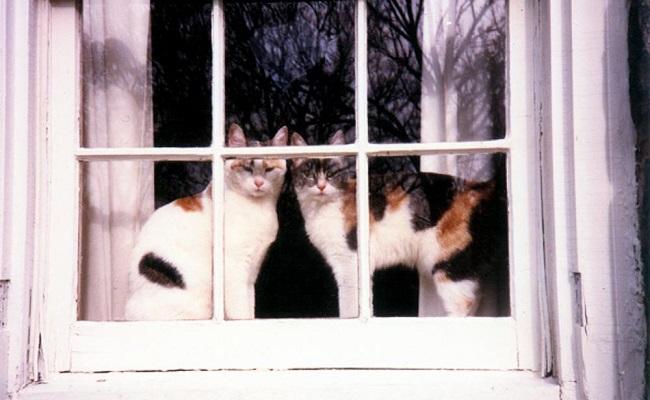 Ancak Birden Fazla Kediyle Yaşayanların Tecrübe Edebileceği 11 Miyavsal Durum