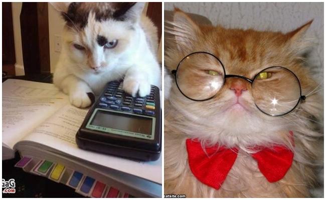 """LYS'den Tam Puan Alarak """"Türkiye'nin En Çalışkan Kedileri"""" Olan 7 Akıllı Miyav"""