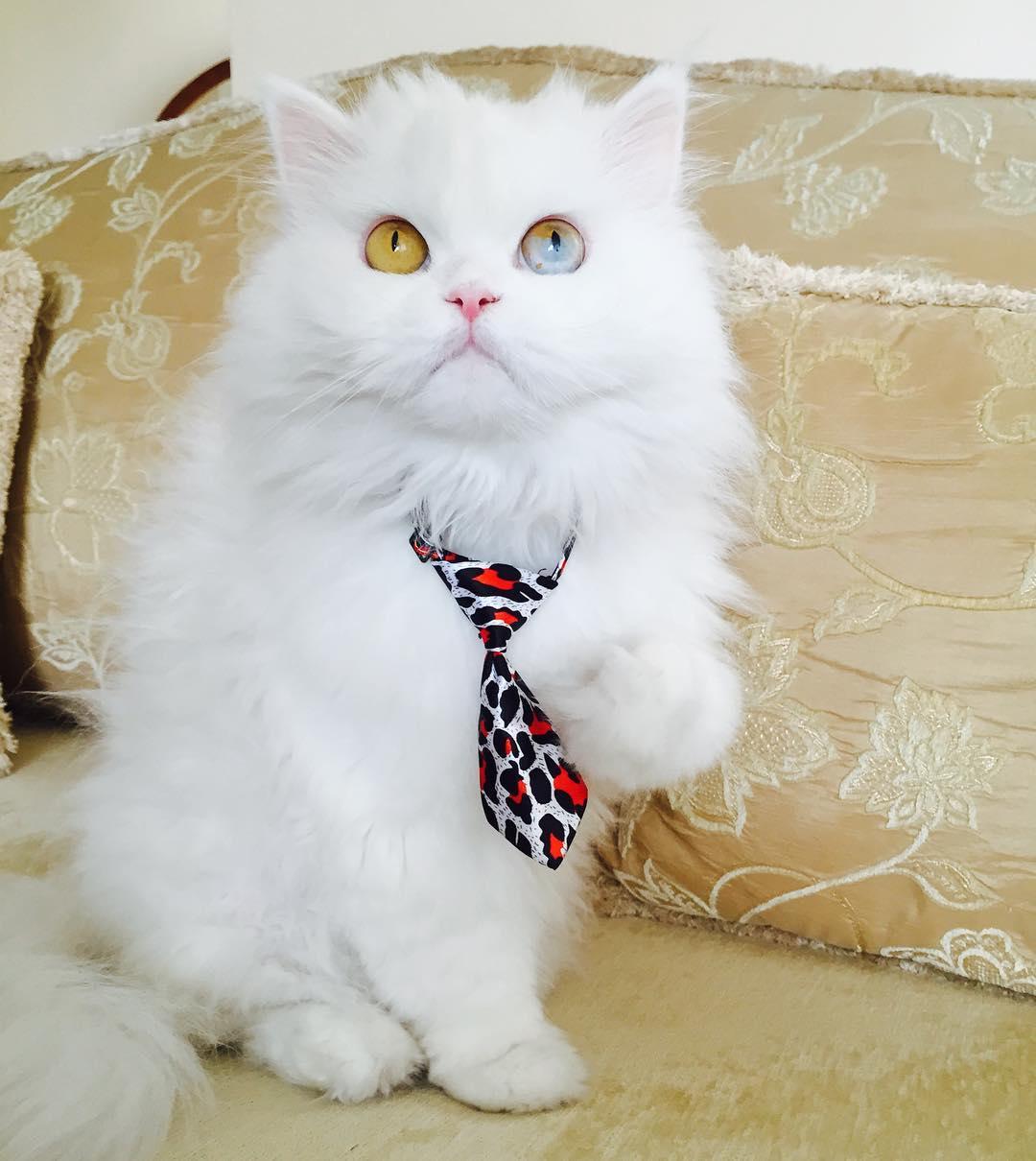 cici-kedi-instagram-patiliyo-2