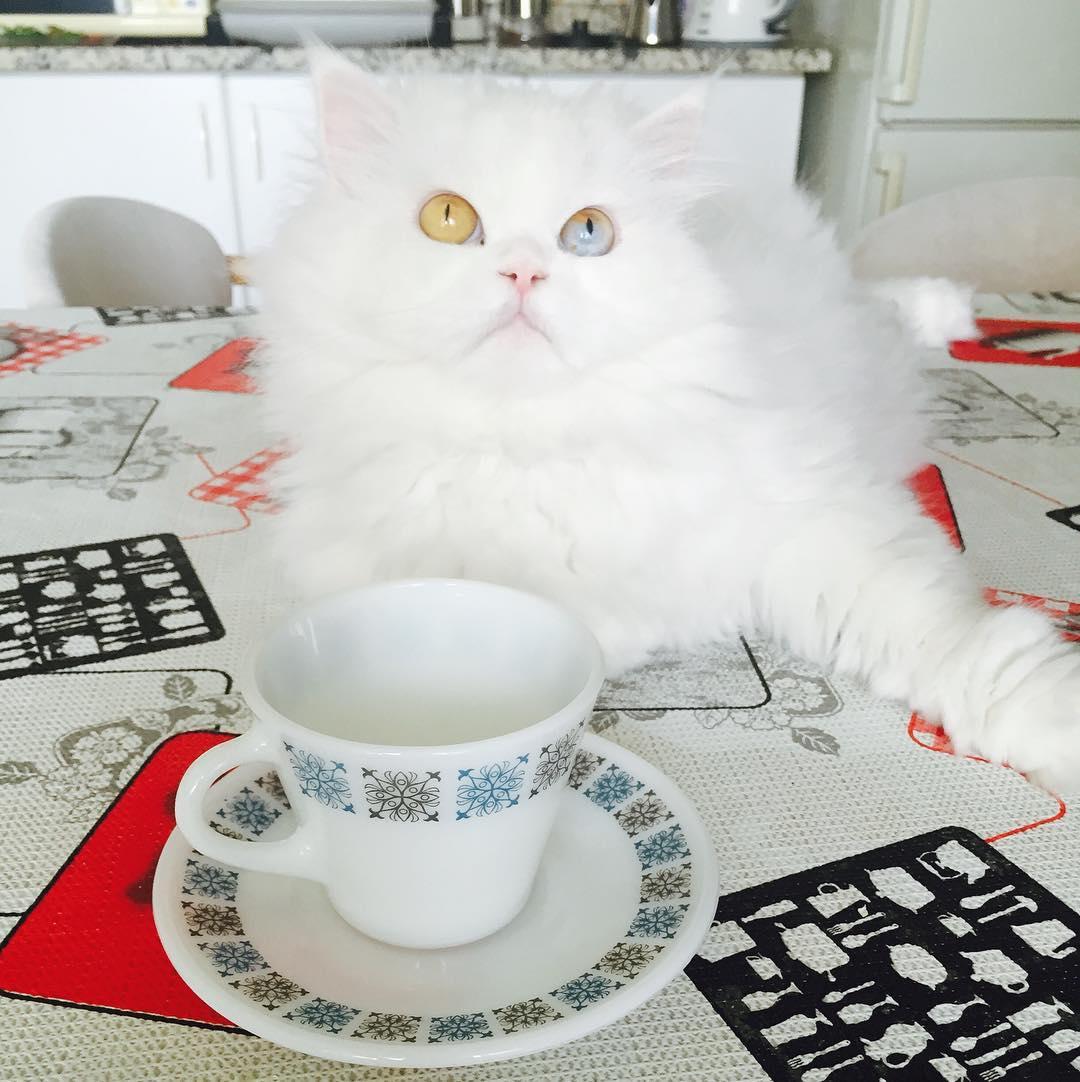 cici-kedi-instagram-patiliyo-4