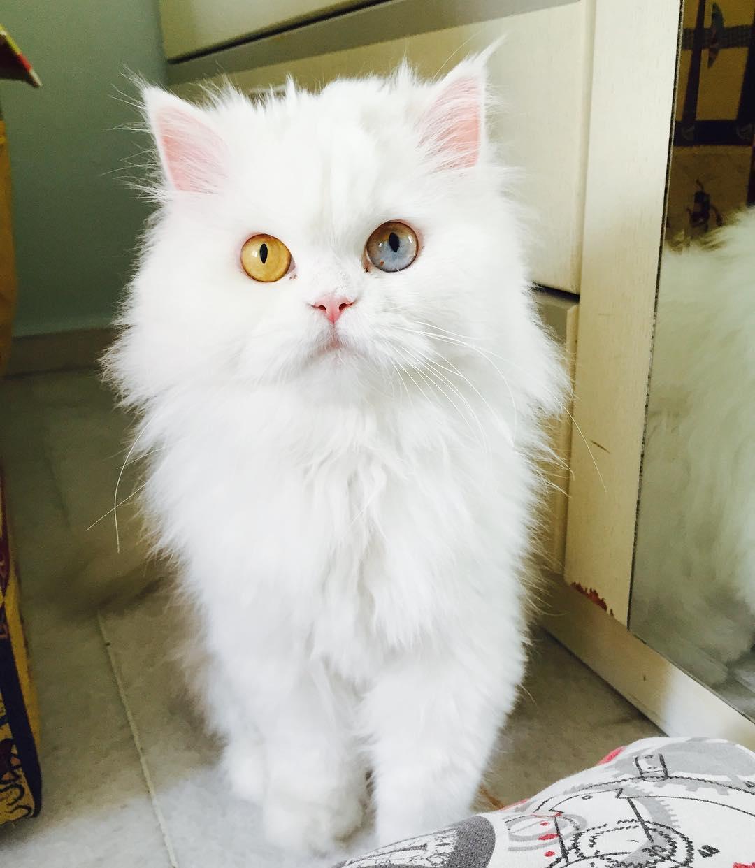 cici-kedi-instagram-patiliyo-5