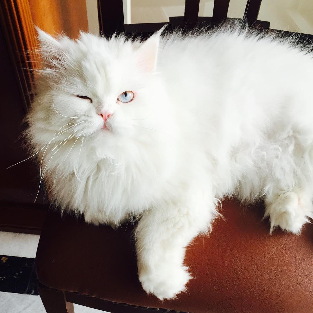 cici-kedi-instagram-patiliyo-8