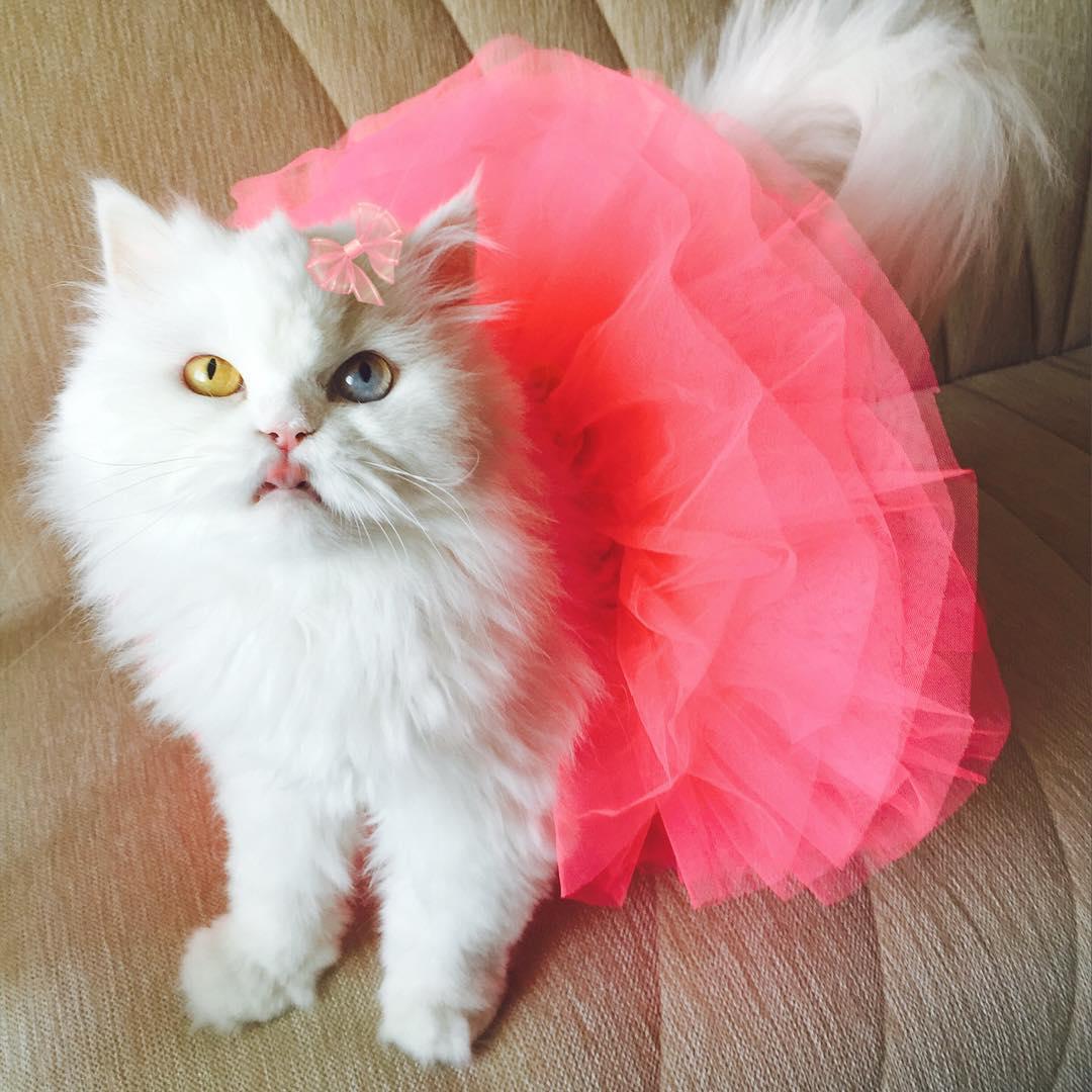cici-kedi-instagram-patiliyo-9