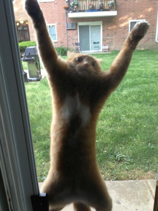 cok-yaramaz-kediler-patiliyo-4