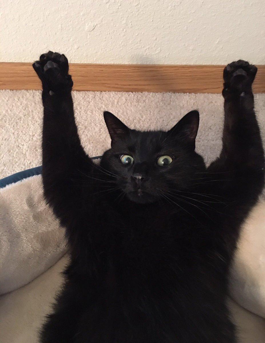 cok-yaramaz-kediler-patiliyo-7