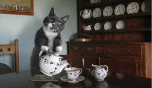 ev-kedisi-olmak