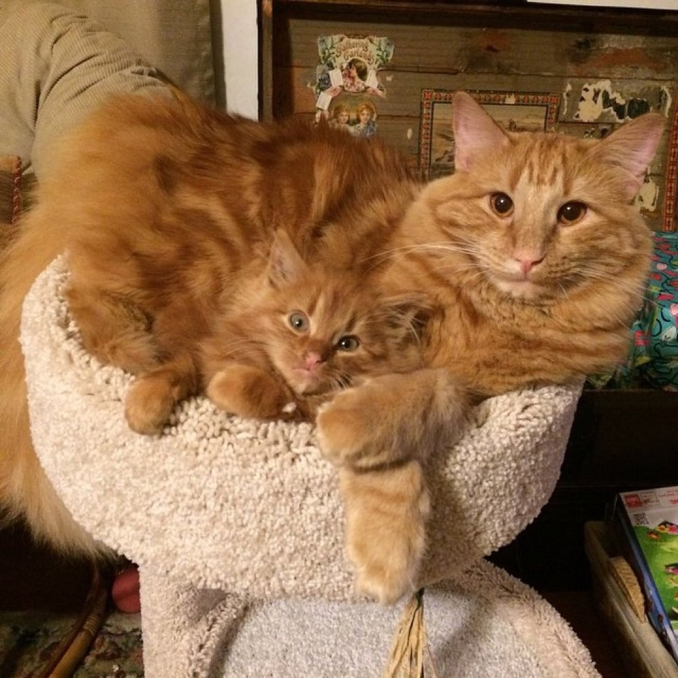 evlatlik-kedi-patiliyo-5