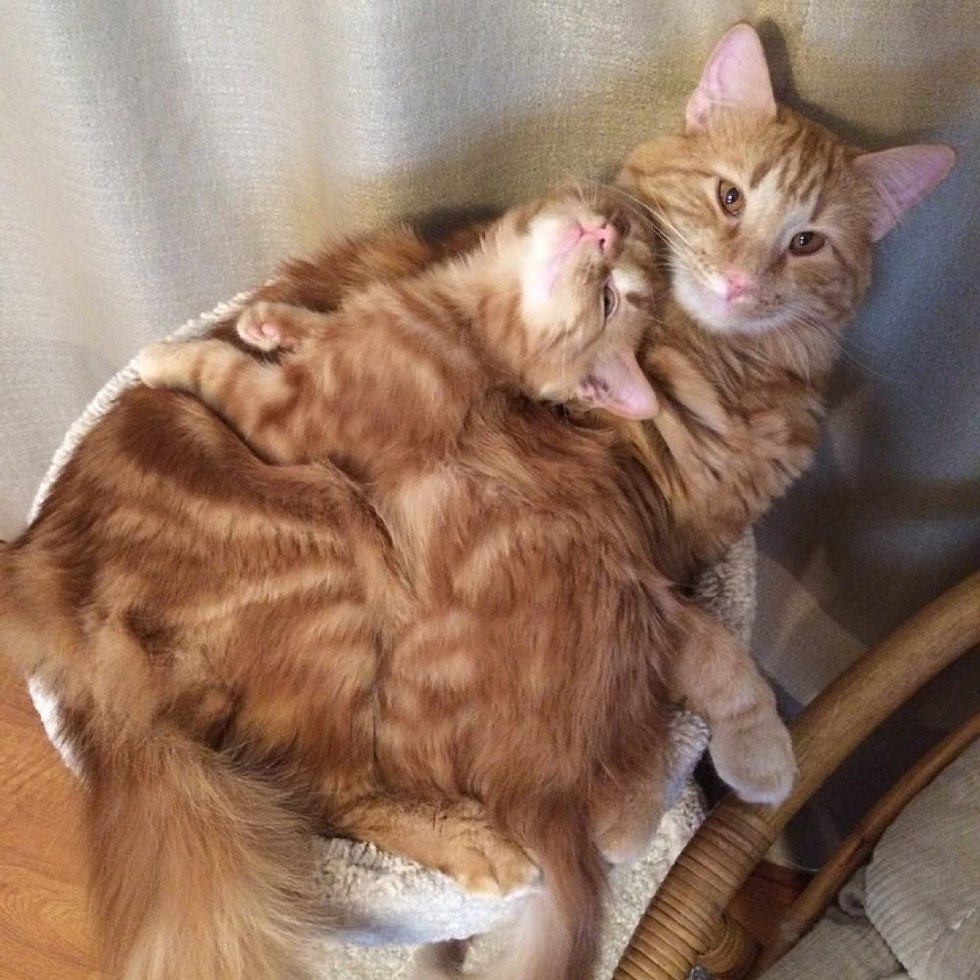 evlatlik-kedi-patiliyo-7